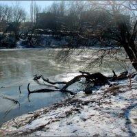 Ростов-на-Дону. Река Темерник в парке Октября... :: Нина Бутко