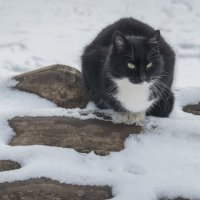 Особенности зимней охоты. :: Анатолий Щербак