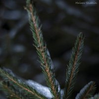 Природа :: Шахин Халаев