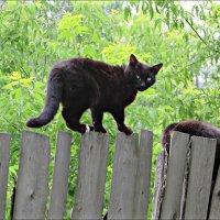 Жил да был черный кот за углом... :: Leonid Rutov