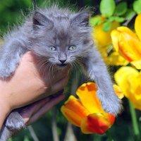 С первым днём весны и с днём кошек, дорогие друзья!!! :: оля san-alondra