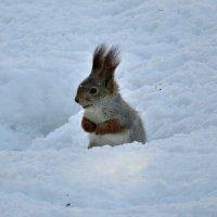 В снегу :: наталия