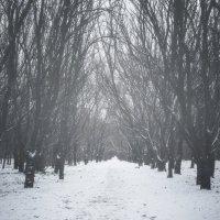 Февральский парк. :: Анатолий Щербак