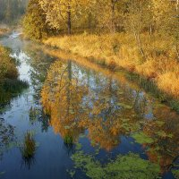 Осень на Нурме. :: Александр Смирнов