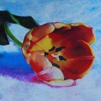 Тюльпан в оранжевом цвете, напоминает нам о лете. (Картина выполнена пастелью). :: Лара Гамильтон