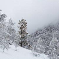 в Алтае зима :: Лариса Б