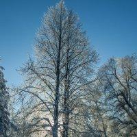 Зима - лазурь и серебро :: Александр Петров