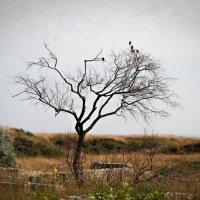 ...Одинокое дерево... :: Игорь Сорокин