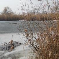 Верба зацвела на озере :: Галина