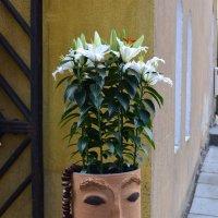 Модный ирокез :: Ольга