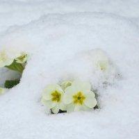 это весна :: валя