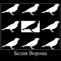 Белая  Ворона. :: Eva Tisse