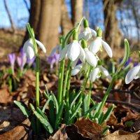 Весна идет, весна идет! :: Galina Dzubina