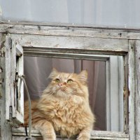 Кошка в окошке. :: наталия