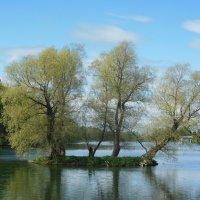 Три деревца в Гатчинском парке. :: Татьяна