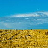 Осень на хлебных полях. :: юрий Амосов