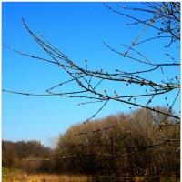 Тёплый день в марте... :: Тамара (st.tamara)