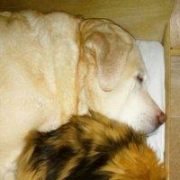 Спять усталые зверюшки :: Ольга