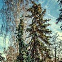 Вальс деревьев :: Нина