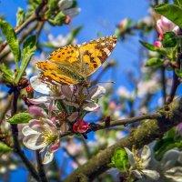 Скоро весна!!!) :: Лейла Новикова