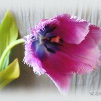 Весенний привет... :: Тамара (st.tamara)