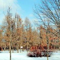 Зима или весна? :: Олег Попков