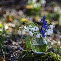 Краски леса. :: Елена Куценко