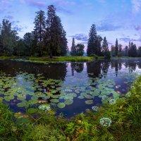 Старый пруд в Шуваловском парке. :: Фёдор. Лашков