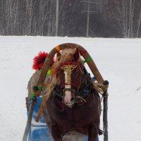 И только снег из под копыт.. :: nadyasilyuk Вознюк
