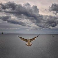 """Здравствуйте Вам! (Из серии """"Никогда не учите птиц летать..."""") :: Александр Бойко"""