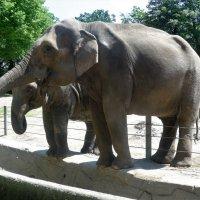 Улыбающиеся слоны :: Nina Yudicheva
