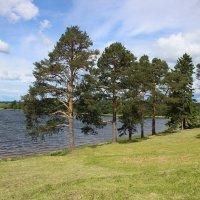 Озеро возле Ферапонтова монастыря. :: Ираида Мишурко