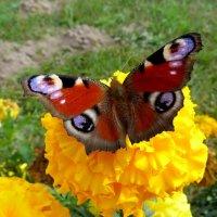 цветы крылатые и земные 1 :: Александр Прокудин
