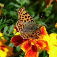 цветы крылатые и земные 5 :: Александр Прокудин