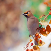 Портрет красивой птицы :: Анатолий Иргл