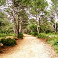 Дорога в сказочный лес :: Tatyana