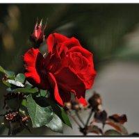 Дорогие женщины, с праздником весны вас! :: Leonid Korenfeld