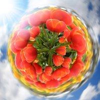 Планета тюльпанов..... :: Лилия .