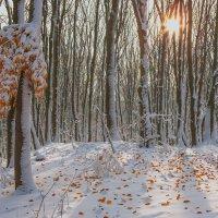 Ранний снег. :: Владимир Лобанов