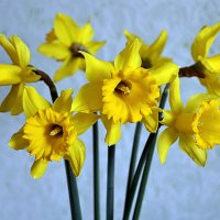 Дорогие женщины, с весенним праздником 8 марта! :: Светлана