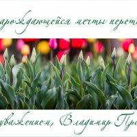 С праздником милые наши! :: allphotokz Пронин