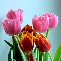 Женщины, с праздником весны! :: Асылбек Айманов