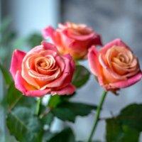 С 8 марта, милые женщины! :: Peteris Kalmuks