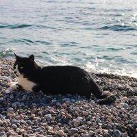 Ялтинский кот :: Виктория Комарова