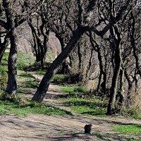 Деревья слушают историю Пенька :: Валерий Дворников