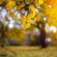 Осень :: Таня Харитонова