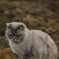 Ася мышкует :: Евгений