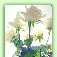 Белые розы.. :: Galina ✋ ✋✋