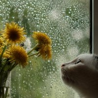 Весна :: Елена Логачева