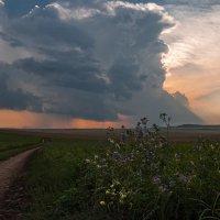 Вечерние цветы :: Наталия Женишек